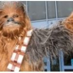 VIDEO: Service dog goes nuts for Chewbacca at Disney World